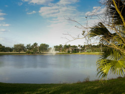 Lakes and Palm Trees